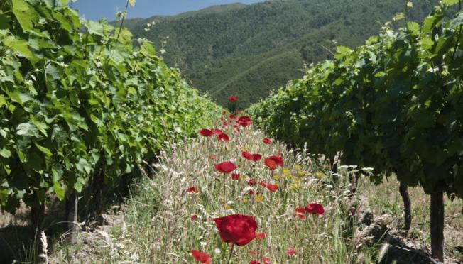 Vinhos Biodinâmicos, já ouviu falar?